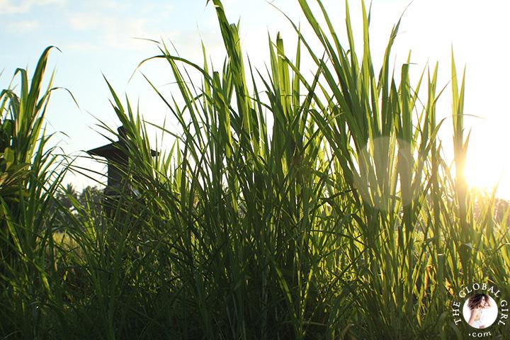 theglobalgirl-the-global-rice-paddy-fields-ubud-bali-indonesia-getaway-sunrise-nature-travel-08