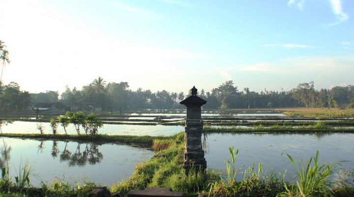 The Global Girl Travels: Ubud rice paddy fileds at sunrise, Bali.