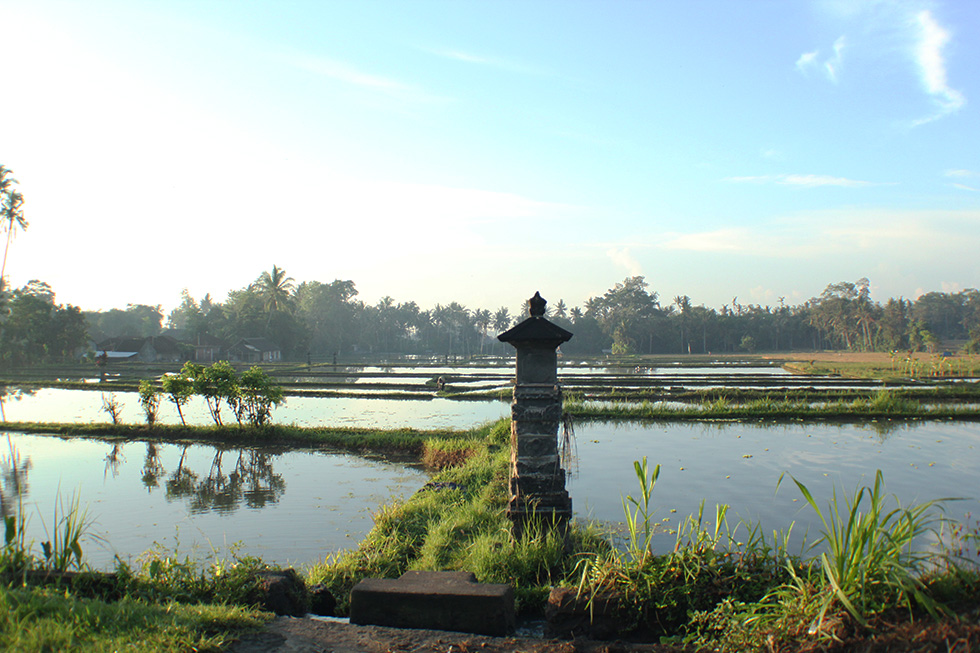 The Global Girl Travels: Ubud rice paddy fileds at sunrise, Bali.