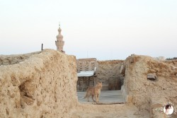 al-babinshal-hotel-siwa-desert-oasis-egypt-the-global-girl-theglobalgirl-10